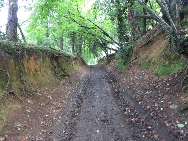 Lane through Burcombe Wood
