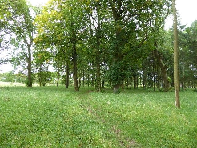 Woodland on Dumfries House Estate