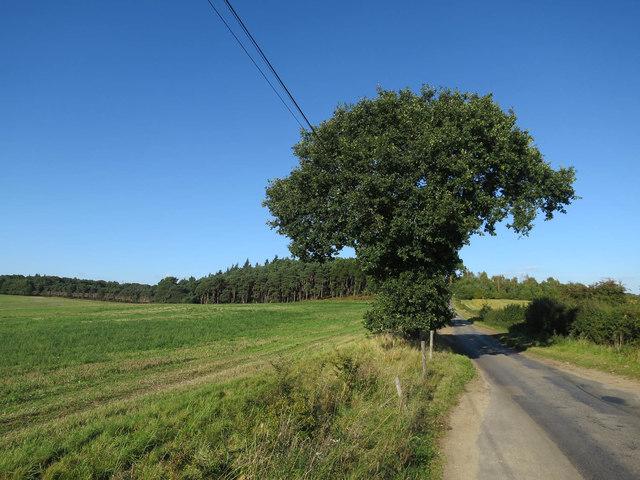Tree by Taverham Road