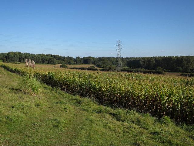 Pylon and maize strip