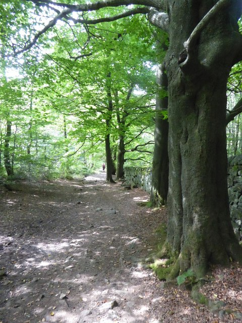Old track, now a path in Hay Wood