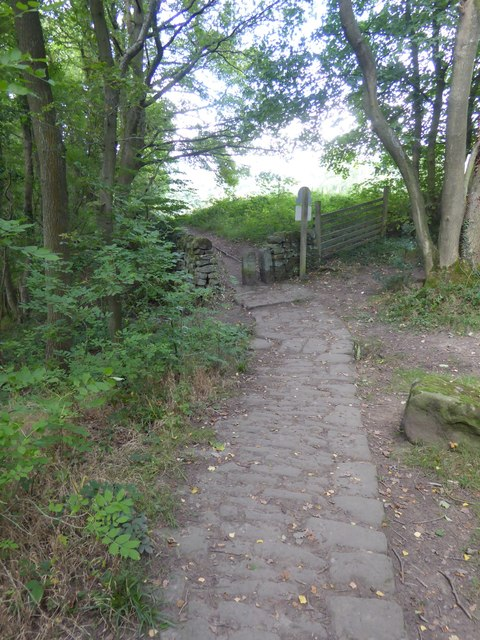 Stone paving of a path in Horse Hay Coppice