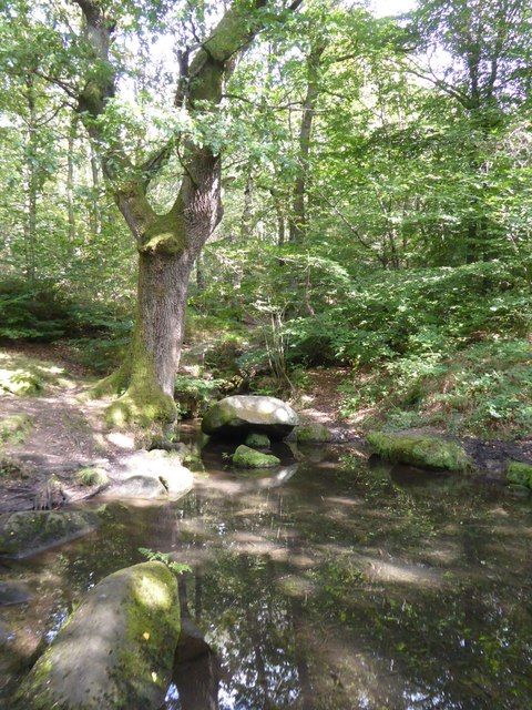 Pool in Horse Hay Coppice