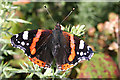 NJ6066 : Red Admiral (Vanessa atalanta) by Anne Burgess