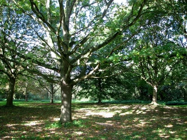 On the edge of Swardeston Common
