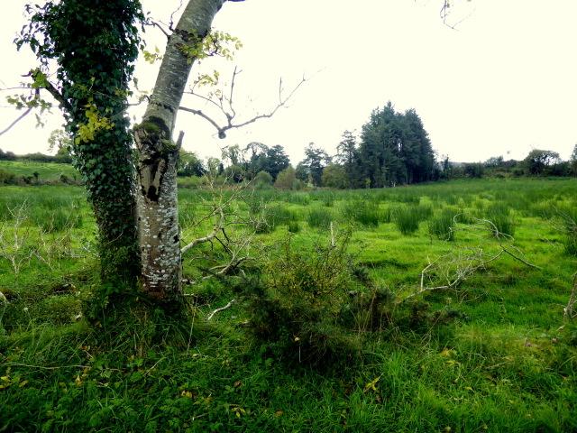 Rushy ground, Killen