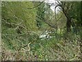 SK2329 : Old loop of the River Dove by Ian Calderwood