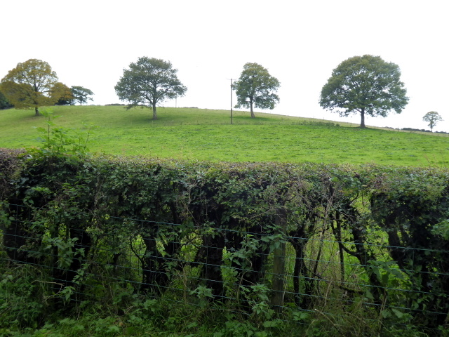 Trees along a hill, Drumquin