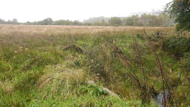 Field, Moss