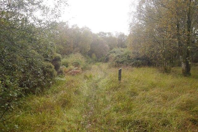 Path, Shian Wood