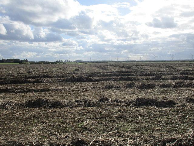 Remains of a potato crop