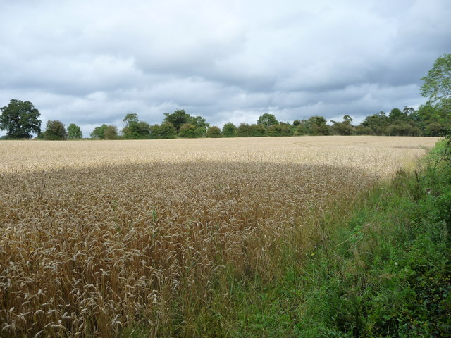 Wheatfield, south-west of Newton Harcourt