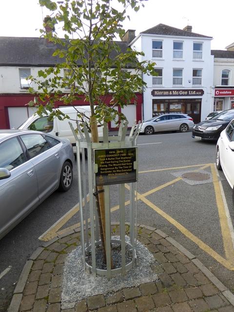 Commemorative tree in Market Street, Ardee