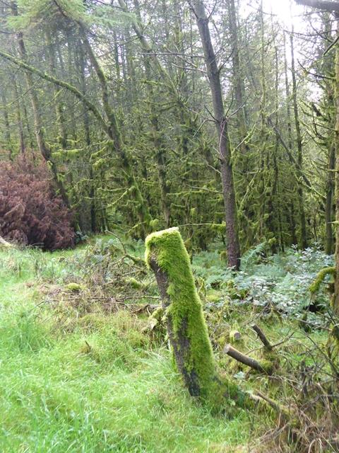 Moist woodland at Loughanleagh