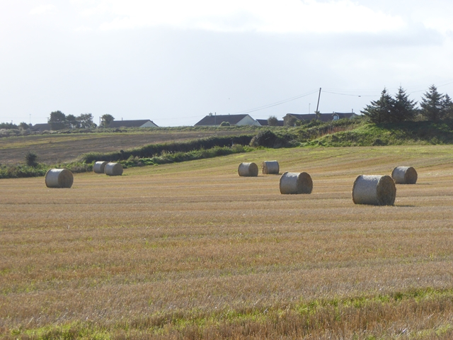 Field with bales