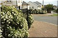 SX9064 : Viburnum, Barton Road, Torquay by Derek Harper