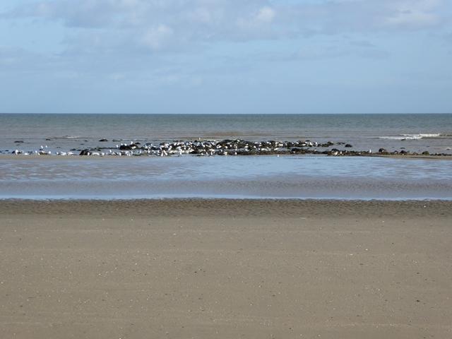 Beach at Ganderstown