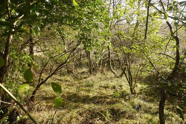 Wetland, Ardnaclach