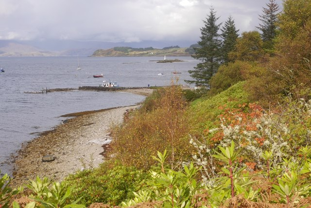 Rhododendron choked coast
