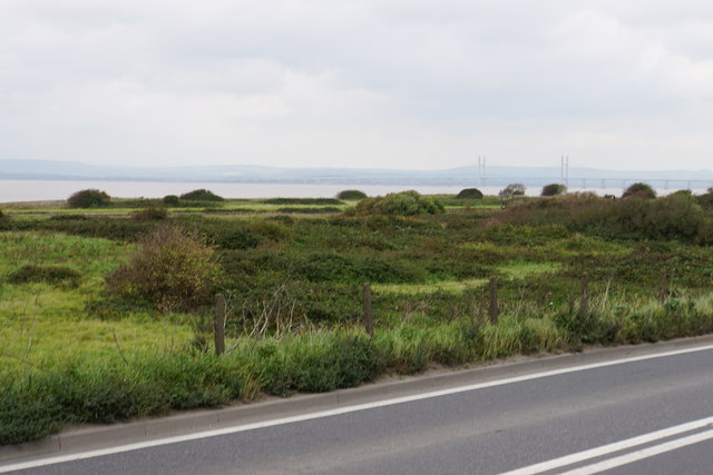 Scrubland by the Severn Estuary