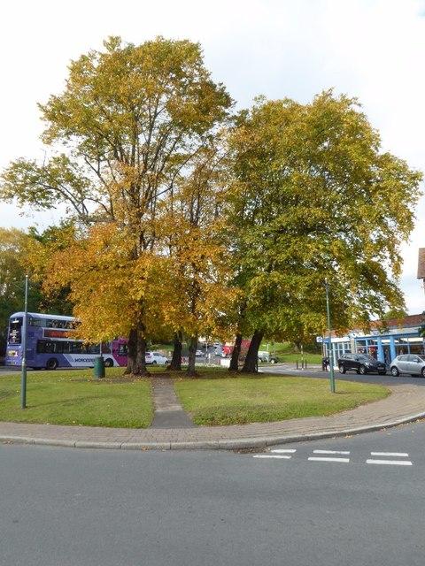 Trees at Barnard's Green