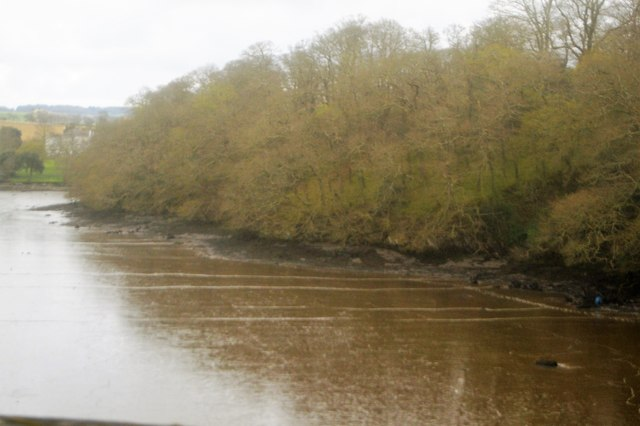 Wooded bank, River Tavy