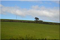 SX3257 : Pasture by N Chadwick