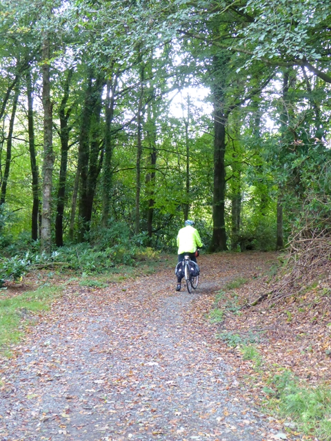 Forest trail in the Bailieborough Demesne