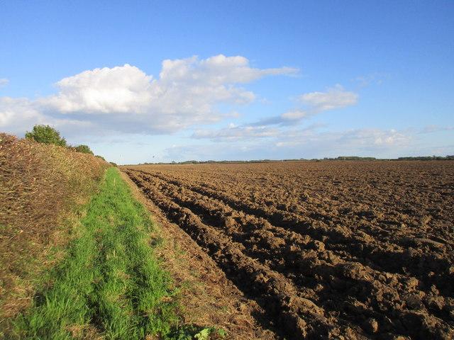 Ploughed field off Dunnington Lane