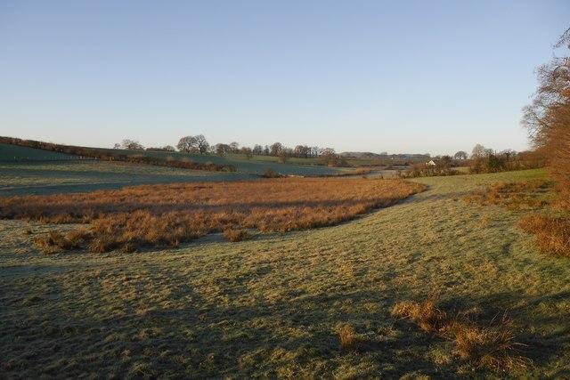 Damp pasture, Kirkton