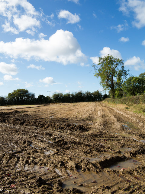 Wheel ruts in mud of stubble field