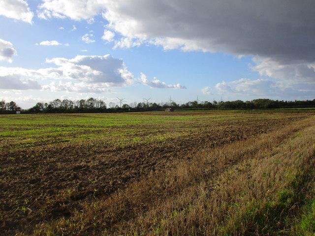 Field near Ulrome Grange