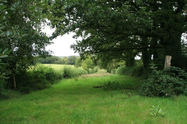 Path to Brackett's Coppice near Ocean Hill