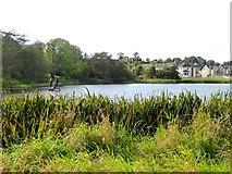 N6796 : Bailieborough Lough by Oliver Dixon