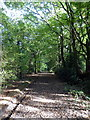 TQ4726 : The Wealdway near Fairwarp by PAUL FARMER