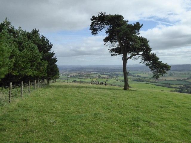 Woodland on Raddon Hill