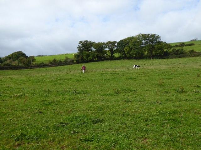 Field and footpath near Raddon Barton