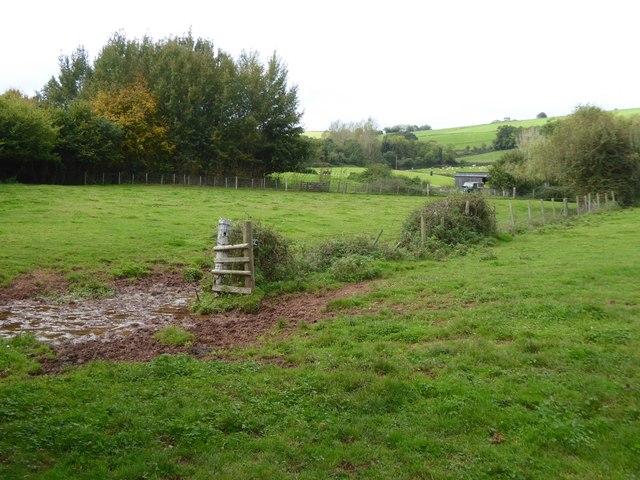 Muddy stream near Chapel Farm