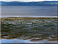 C5922 : Wading Birds on Lough Foyle by David Dixon