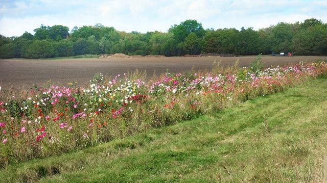 Flowers by a field