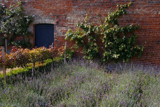 Herbs in the kitchen garden, Audley End