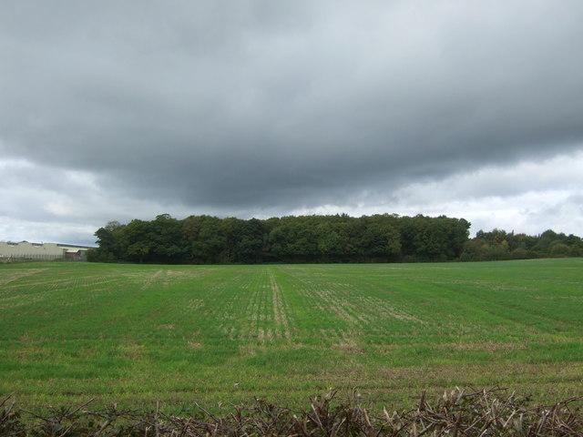 Square Covert, Hopton Heath