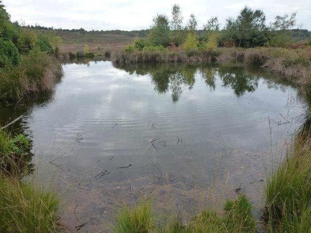 The Decoy - A pond on Dersingham Bog, Norfolk