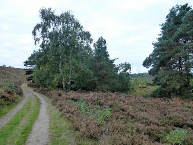 Track on the edge of Dersingham Bog, Norfolk