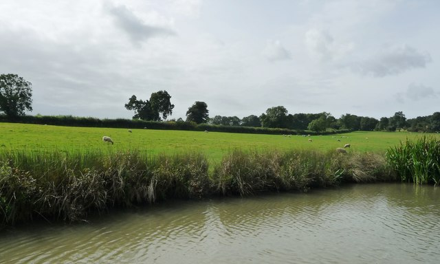 Sheep grazing on the canal bank, north-east of Bridge 9