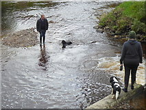 H4772 : Out with the dogs, Cranny / Mullaghmore by Kenneth  Allen