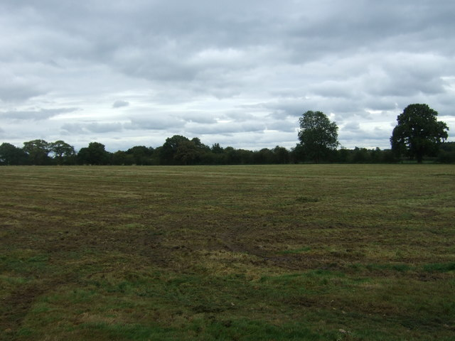 Field near Cook's Coppice