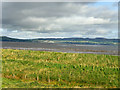 C6329 : Mud Flats and Seabirds, Lough Foyle by David Dixon