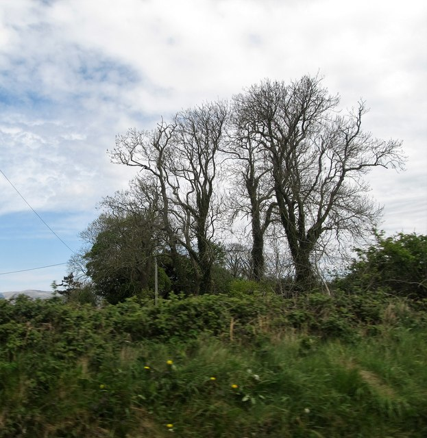 Trees in the hedgerow in the Townland of Grange Old