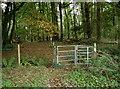 ST6462 : To the Hunstrete Plantation by Neil Owen